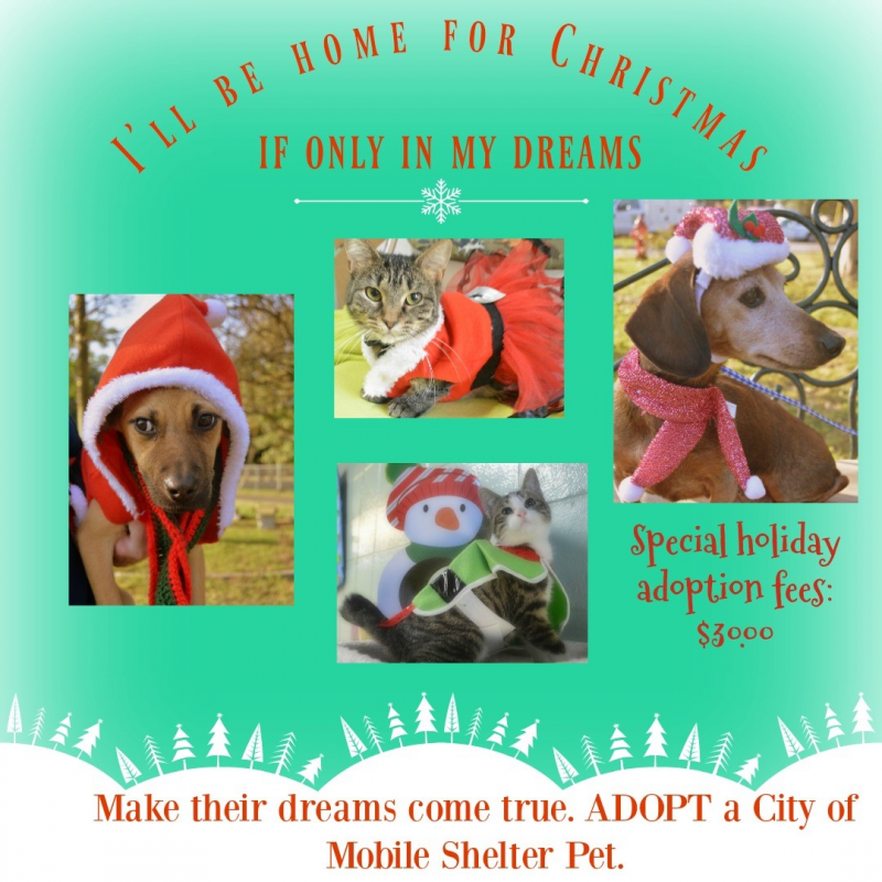 Give a Shelter Pet a Home Before Christmas