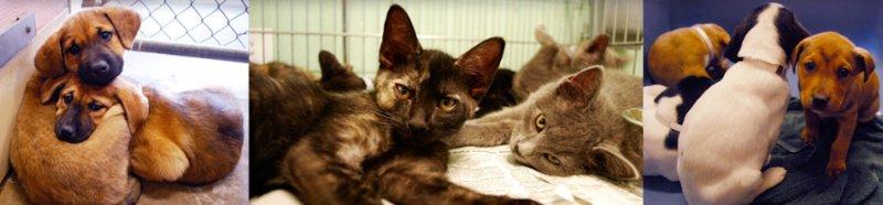 Free Pet Adoption